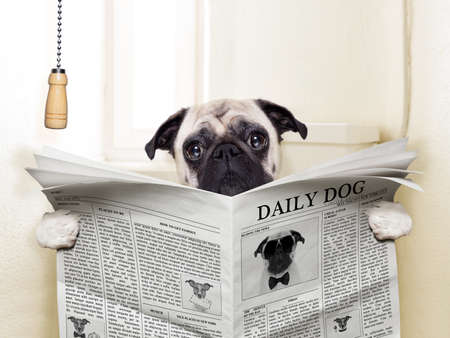 Foto de pug dog sitting on toilet and reading magazine having a break - Imagen libre de derechos