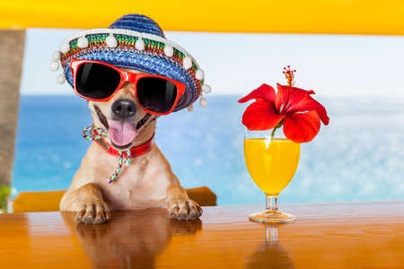 Photo for funny cool chihuahua dog drinking cocktails at the bar in a  beach club party with ocean view - Royalty Free Image