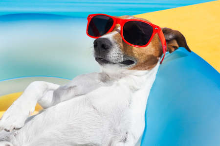 Photo for Dog lying on air mattress by the swimming pool sun tanning with sunglasses relaxing and resting - Royalty Free Image