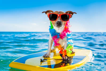 Photo for dog surfing on a surfboard wearing a flower chain and sunglasses, at the ocean shore - Royalty Free Image