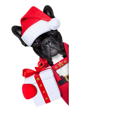 Photo for Santa claus christmas dog wearing a hat with a  xmas gift or present for you , besides a white or blank placard, isolated on white background - Royalty Free Image