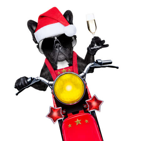 santa claus dog on motorbike toasting cheers to everyone, isolated on white blank white background