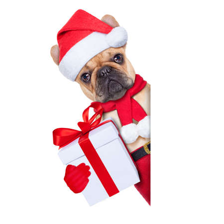 Photo for santa claus christmas dog t with present besides white blank placard or banner, isolated on white background - Royalty Free Image
