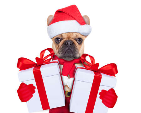 Photo for Dog wearing a santa hat with a  xmas gift or present for you - Royalty Free Image