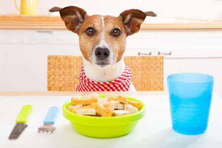 jack russell dog sitting at table ready to eat a full food bowl as a healthy meal, tablecloths included