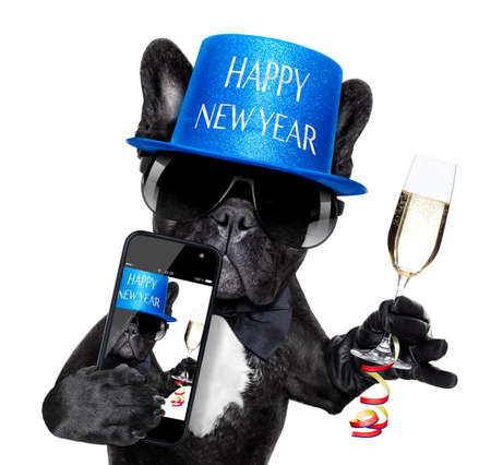 french bulldog dog ready to toast for new years eve, taking a selfie or photo, isolated on white background