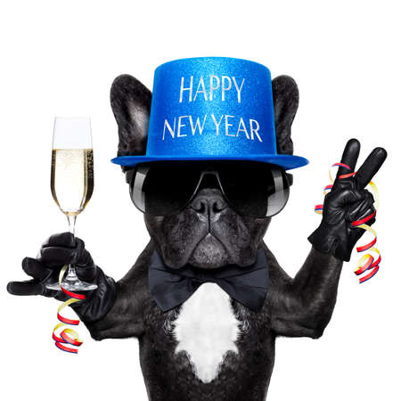 Photo for french bulldog with a  champagne glass and victory or peace fingers - Royalty Free Image