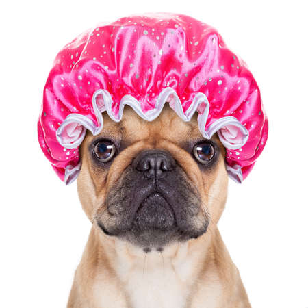 Photo pour french bulldog dog ready to have a bath or a shower wearing a bathing cap, isolated on white background - image libre de droit