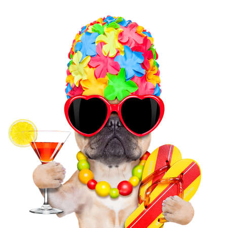 Photo for fawn french bulldog dog ready for summer vacation or holidays, wearing sunglasses and having a  cocktail,  isolated on white background - Royalty Free Image