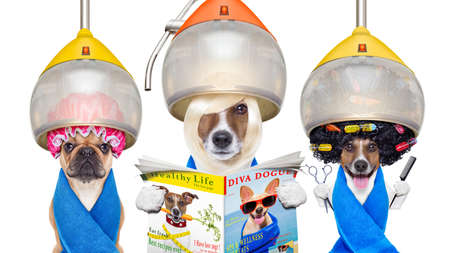 Photo pour group or team of dogs at the groomer or hairdresser, under  drying hood,holding  scissors ,hair comb, reading a magazine, isolated on white background - image libre de droit