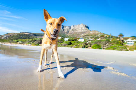 Photo pour terrier dog having fun,running , jumping and playing at the beach on summer holidays - image libre de droit