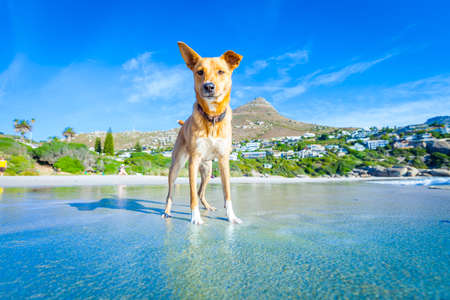 Foto de terrier dog having fun,running , jumping and playing at the beach on summer holidays - Imagen libre de derechos