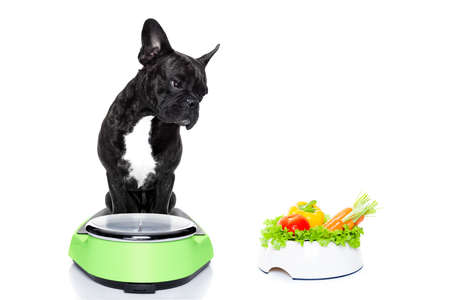 Foto de french bulldog dog  with  healthy  vegan food bowl,sitting on a weight scale, isolated on white background - Imagen libre de derechos