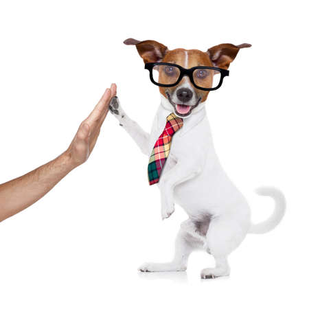 Photo for jack russell dog high five with paws with hand of owner , happy and celebrating their success as a partner and   business team  , isolated on white background - Royalty Free Image