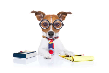 jack russell secretary accountant dog with calculator, a note pad and pencil beside, isolated on white background