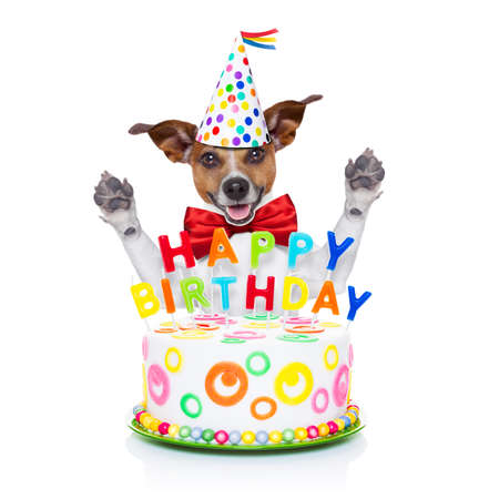 Jack Russell Dog As A Surprise Behind Happy Birthday Cake With Candles Wearing Red Tie And Party Hat Isolated On White Background Lizenzfreie Bilder Und