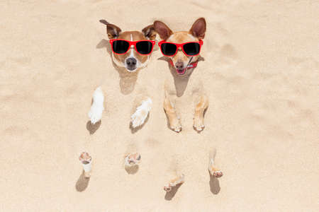 Photo pour couple of two dogs  buried in the sand at the beach on summer vacation holidays , having fun and enjoying ,wearing red sunglasses - image libre de droit