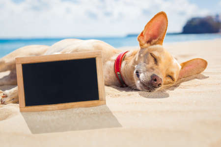 Foto de chihuahua dog  relaxing and resting  lying on the sand at the beach on summer vacation holidays blank and empty  blackboard  placard or banner  buried in the sand - Imagen libre de derechos