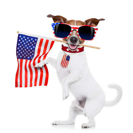 jack russell dog  holding a flag of usa on independence day on 4th  of july  with mouth  isolated on white background wearing american sunglasses