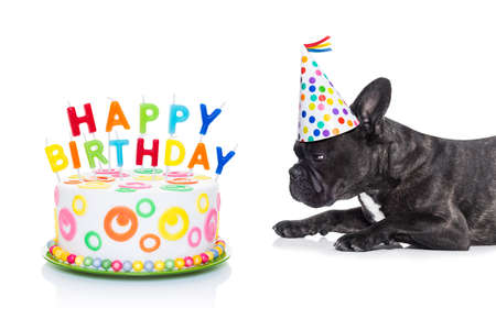 French Bulldog Dog Hungry For A Happy Birthday Cake With Candles Wearing Party Hat Isolated On White Background Lizenzfreie Bilder Und Fotos