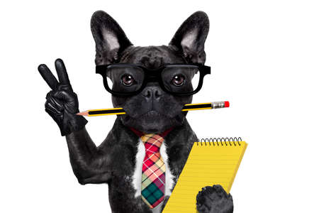 office businessman french bulldog dog with pen or pencil in mouth holding a  notepad and   peace or victory fingers isolated on white background