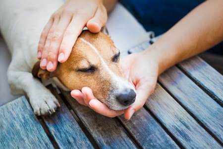 owner  petting his dog, while he is sleeping or resting  with closed eyesの写真素材