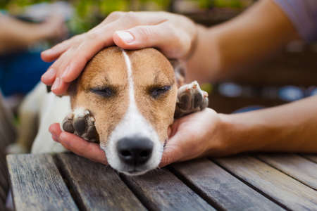 Foto de owner  petting his dog, while he is sleeping or resting  with closed eyes - Imagen libre de derechos