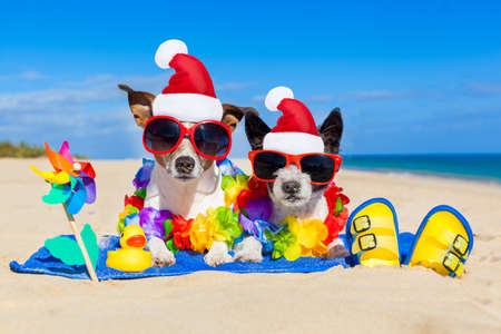Foto de couple of two dog sitting close together wearing santa claus hat at  beach on summer christmas vacation holidays, on a honeymoon retreat - Imagen libre de derechos