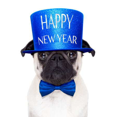pug dog  toasting for new years eve with happy new year hat ,  isolated on white background