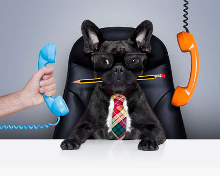 Photo pour office businessman french bulldog dog  as  boss and chef , busy and burnout , sitting on leather chair and desk, telephones hanging around - image libre de droit