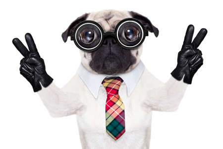 Photo pour dumb crazy pug dog with nerd glasses as an office business worker with pencil in mouth ,making peace and victory signs with finger ,  isolated on white background - image libre de droit