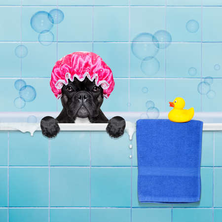 Photo pour french bulldog dog in a bathtub not so amused about that , with yellow plastic duck and towel,wearing a bathing cap - image libre de droit