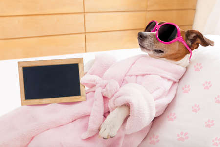 jack russell dog relaxing and lying, in spa wellness center ,wearing a bathrobe and funny sunglasses and blackboard or placard as banner