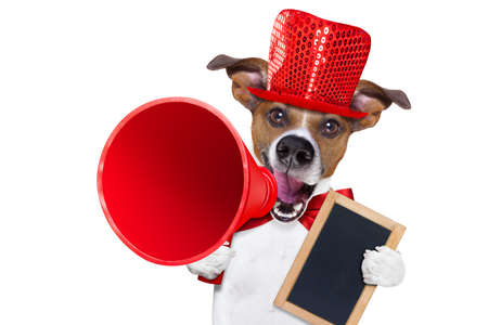 Photo pour jack russell dog ,shouting  and advertising  sale discount  with retro megaphone or big microphone holding white blank placard or blackboard, isolated on white background - image libre de droit