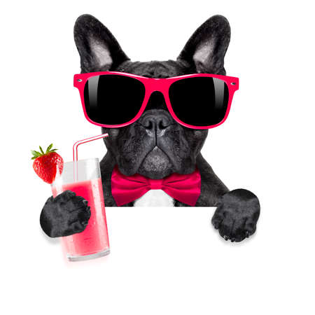 Photo pour french bulldog dog  with cocktail milkshake smoothie and funny glasses behind blank placard or banner , isolated on white background - image libre de droit