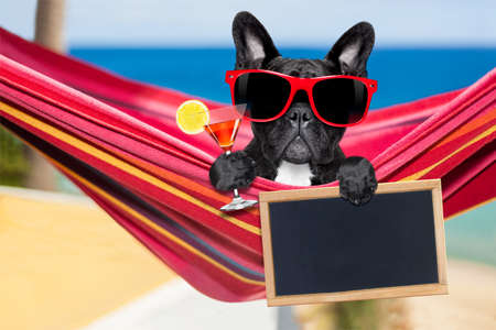 Photo for french bulldog dog relaxing on a fancy red  hammock  with sunglasses and martini cocktail drink, on summer vacation holidays at the beach - Royalty Free Image