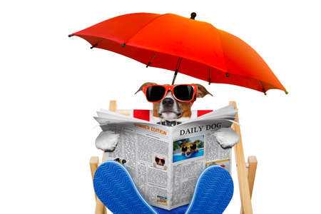Foto de jack russell dog reading newspaper on a beach chair or hammock  with sunglasses under umbrella , on summer vacation holidays, isolated on white background - Imagen libre de derechos