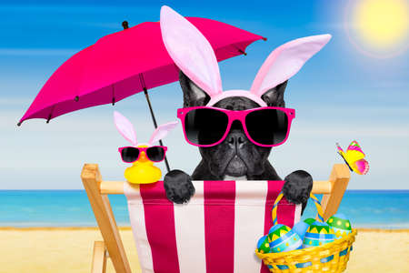 french bulldog dog on a hammock , during easter holidays, with bunny ears, at the beach, in spring