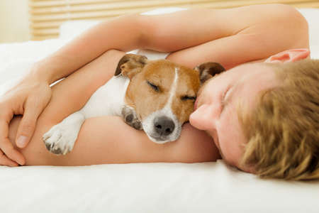 Photo pour jack russell dog in bed resting or sleeping , with owner dreaming in bedroom close together - image libre de droit