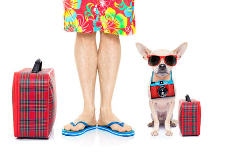 Foto de chihuahua dog and owner ready to go on summer holidays vacation with luggage and bags , isolated on white background - Imagen libre de derechos