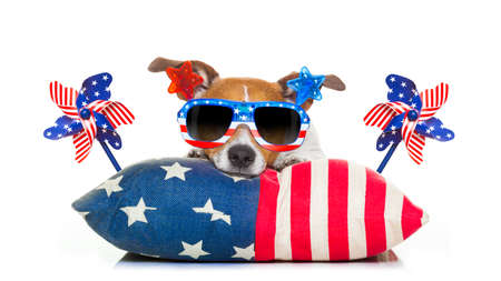 Photo pour jack russell dog celebrating 4th of july independence day holidays with american flags and sunglasses, isolated on white background - image libre de droit