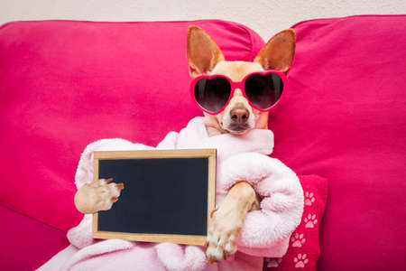 Foto de chihuahua dog relaxing  and lying, in   spa wellness center ,wearing a  bathrobe and funny sunglasses with banner blackboard placard - Imagen libre de derechos