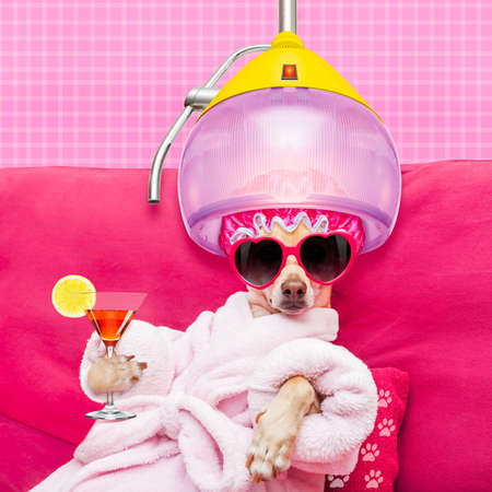Foto de chihuahua dog relaxing  and lying, in   spa wellness center ,wearing a  bathrobe and funny sunglasses with hair dryer or drying hood drinking a cocktail - Imagen libre de derechos