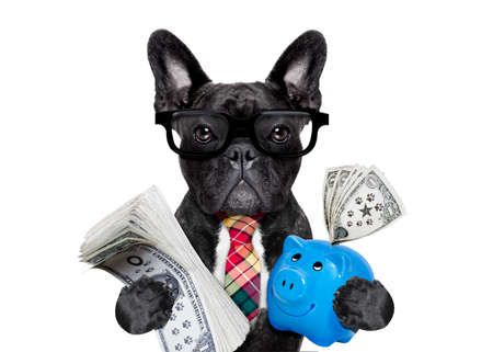 Photo for boss accountant rich french bulldog saving dollars and money with piggy bank or moneybox , with glasses and tie , isolated on white background - Royalty Free Image