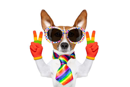crazy funny gay dog proud of human rights , with rainbow flag and sunglasses, isolated on white background