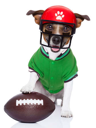 Photo for sporty rugby dog with a big sport ball , isolated on white background wearing american football helmet - Royalty Free Image