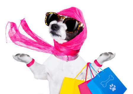 crazy and silly terrier dog diva lady with shopping bag, isolated on white background