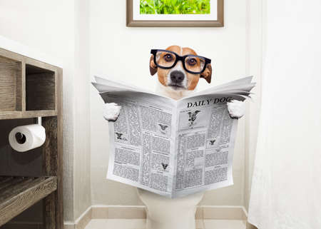 Foto de jack russell terrier, sitting on a toilet seat with digestion problems or constipation reading the gossip magazine or newspaper - Imagen libre de derechos