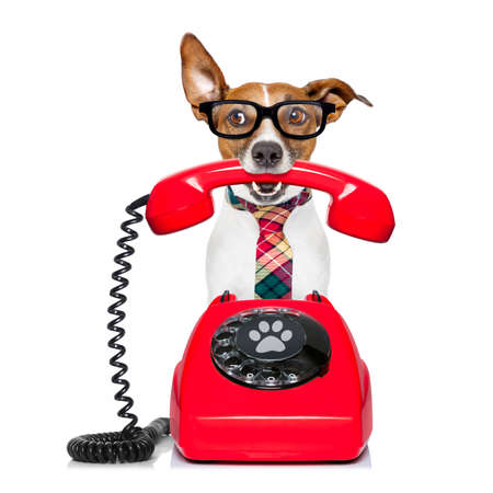 Photo pour Jack russell dog with glasses as secretary or operator with red old  dial telephone or retro classic phone - image libre de droit