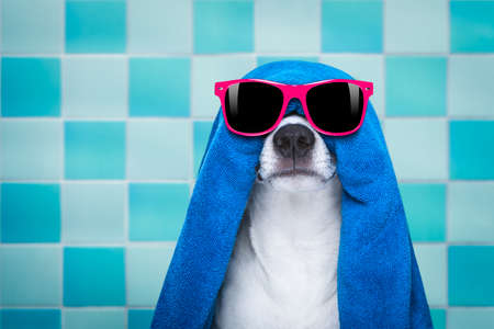 jack russell dog in a bathtub not so amused about that , with blue towel, wearing funny sunglasses or glassses having a spa or wellness treatment